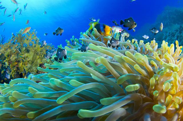 Aquarium Dives -