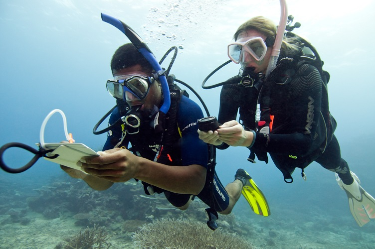 Become a Better Diver -