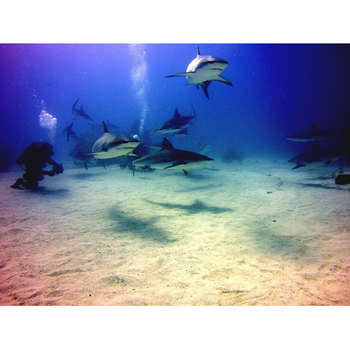 AWARE - Shark Conservation