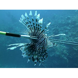 Lionfish Removal Specialist