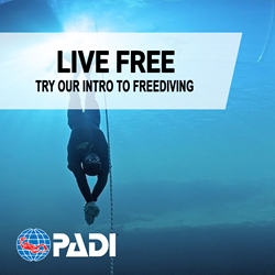 Intro To Freediver