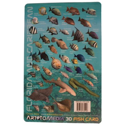 Card, Caribbean & Fl Fish