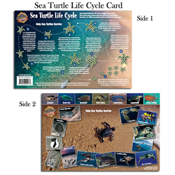 Card, Sea Turtle