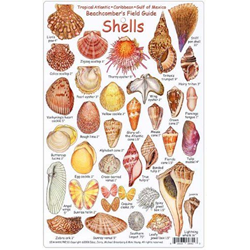 Card, Shell Identification