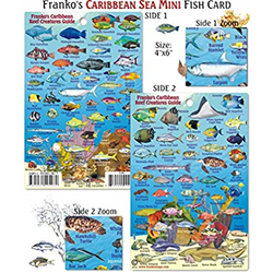Card, Caribbean Reef Mini Id