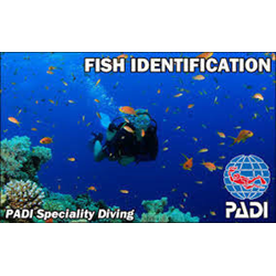 Fish Identification Course
