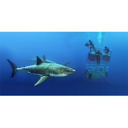 Guadalupe Island Web Registration And Deposit