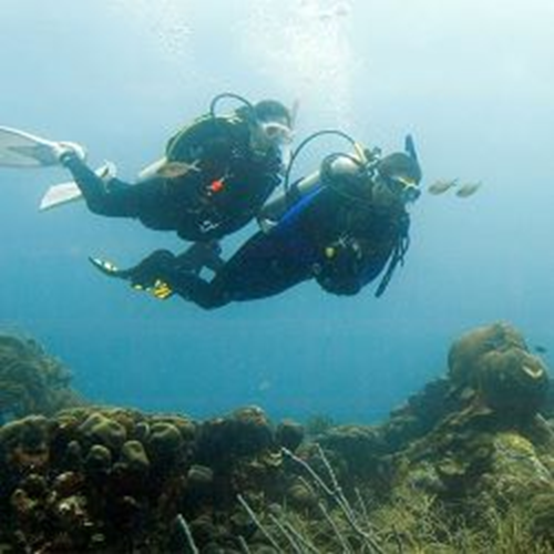 Deep Diver - ONLINE